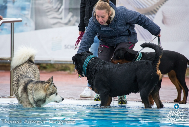 Hundeschwimmen 2021