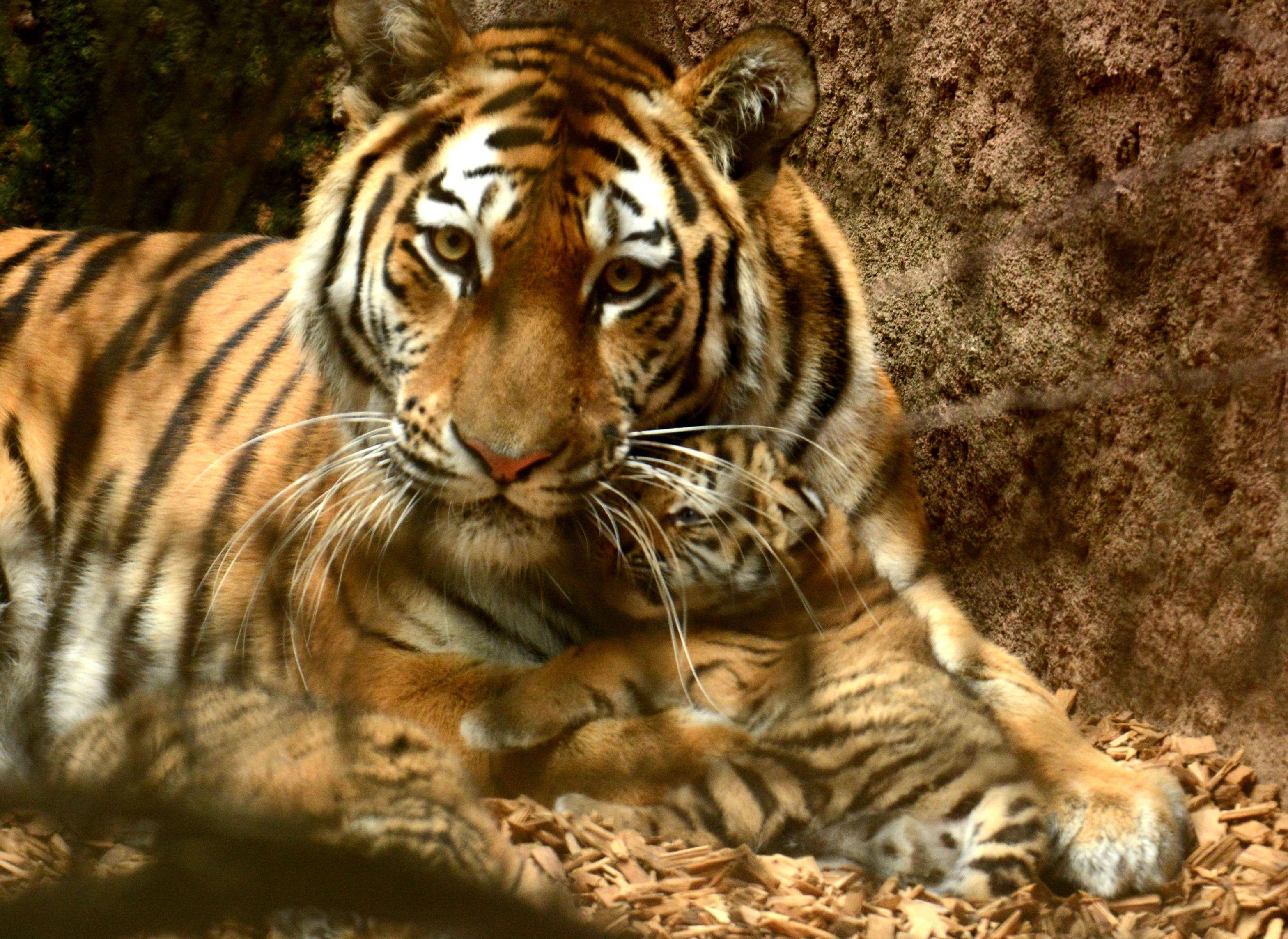Neumarktaktuell Kleine Tiger Entwickeln Sich Gut 30072015